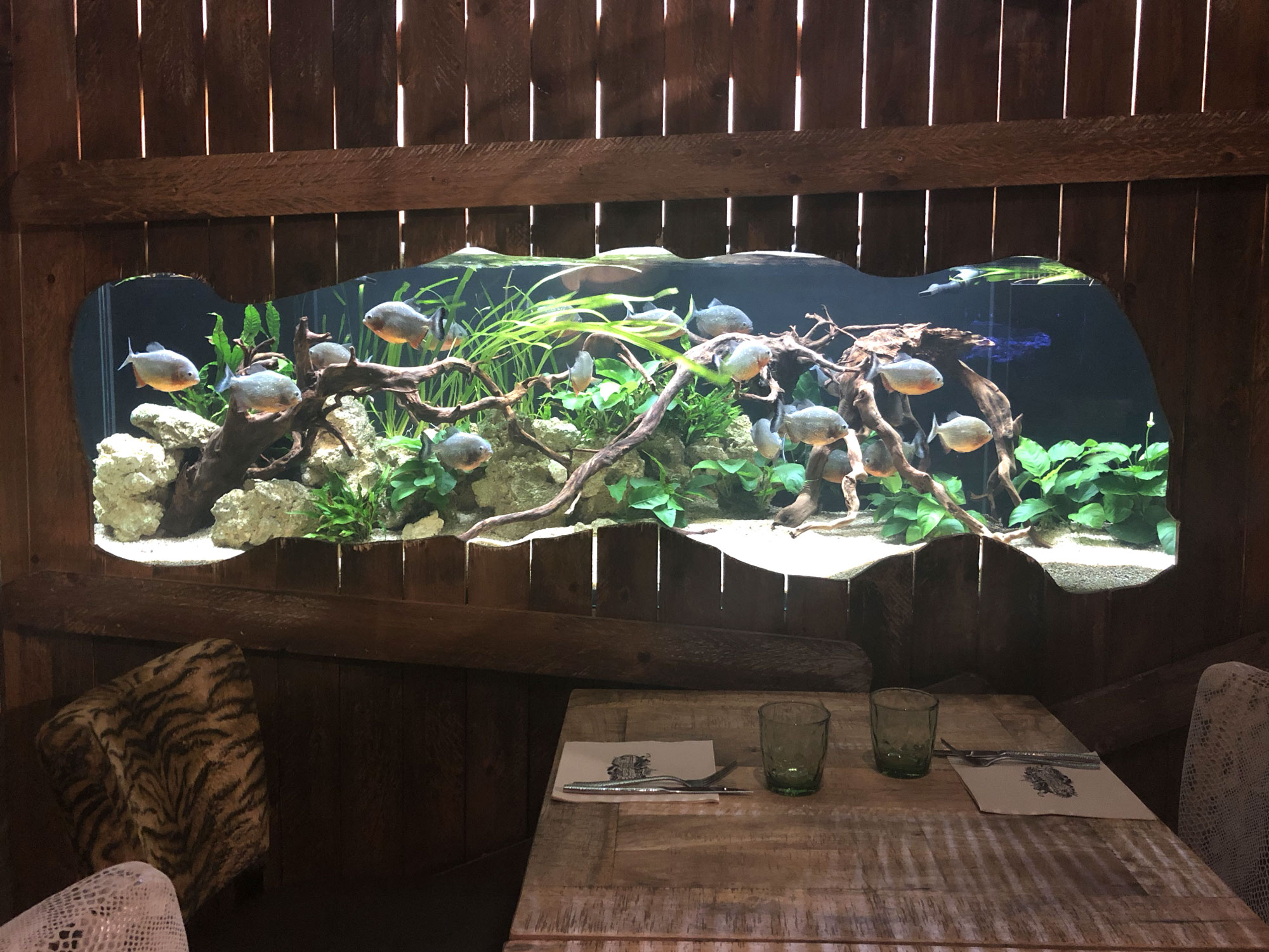 RevartJungle_Aquarium_piranhas